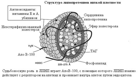 Атеросклероз коронарных артерий осложнения