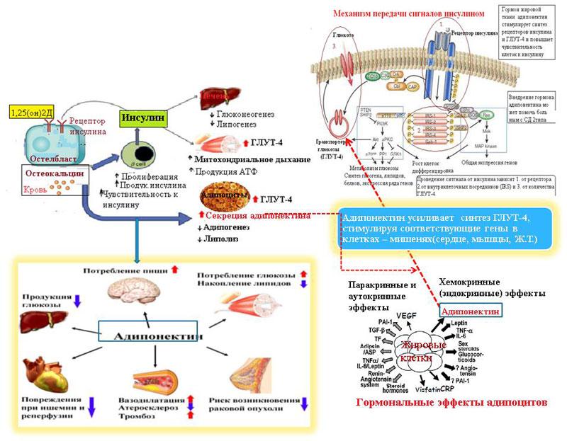Витамин Д и сахарный диабет