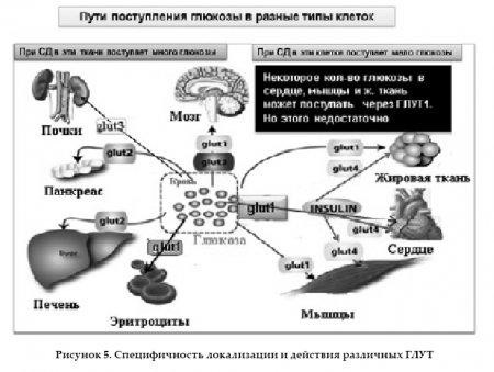 Что скрывается за изменениями уровня гликированного гемоглобина